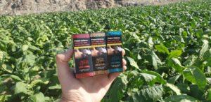 Dokha Tobacco Leafs
